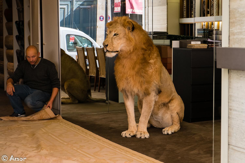 Magasin de lions